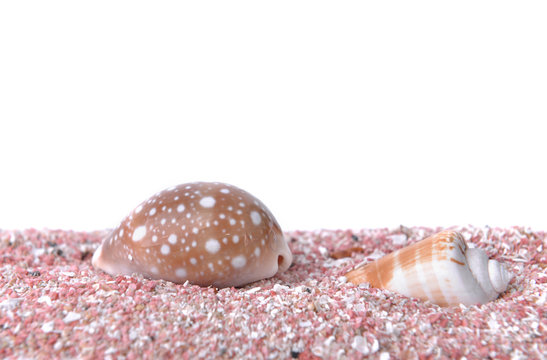 pearly seashells on pink sand under white copy space