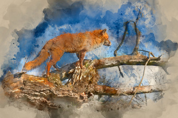Watercolour painting of Superrb natural close up of red fox in natural habitat