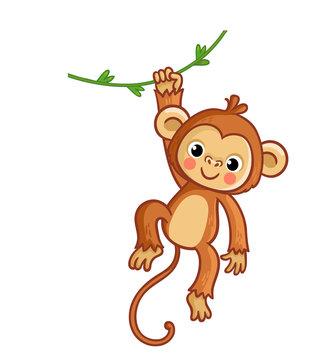 Monkey hanging on liana. Vector illustration. Cute animal.