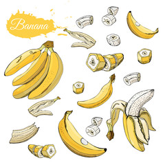 Color set of  yellow bananas. Whole and sliced elemets isolated on white background. Hand drawn sketch.