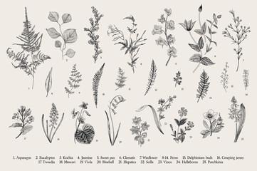 Fototapeta Spring flowers and ferns. Set. Vintage vector botanical illustration. Black and white