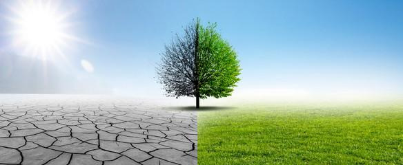 Fototapeta Drought and Green Nature obraz