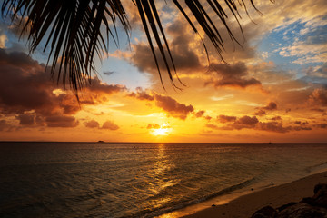sunset on the sea with tropical palm trees