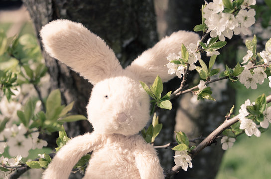 Closeup of stuffed bunny with cherry blossoms