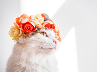 Beautiful Calico Cat with a wreath on his head. Cute kitty in a flowers diadem on her head sits in the sun and looks away