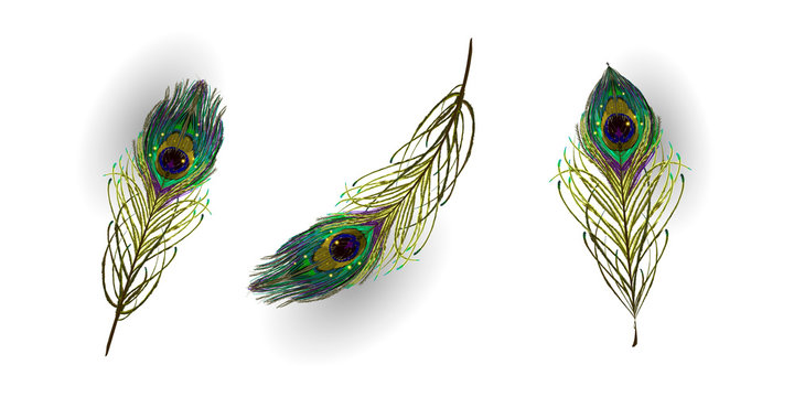 Beautiful collection of vector realistic peacock feathers for online shopping, advertising actions, magazines and websites. Vector illustration.