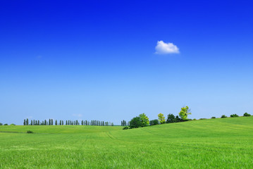 Idyll, view of green field and the blue sky