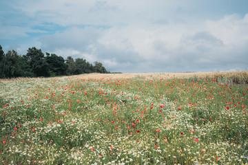 Wiese mit Wildblumen in unberührter Natur, dahinter Ackerbau
