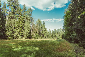 Leśna polana, łąka w lesie