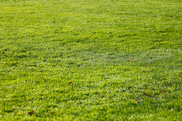 Trawa na boisku do futbolu