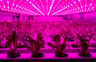 "IKEA to test container farming technologies part of their sustainability initiative ""One Home, One Planet\"