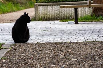黒猫 black cat