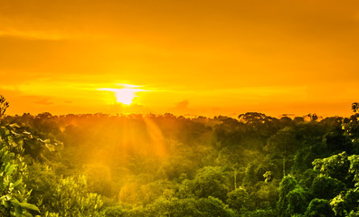sunset over the trees in the brazilian rainforest of Amazonas Wall mural