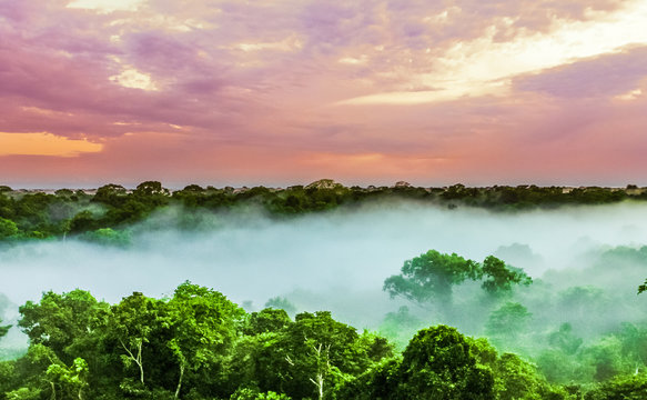 sunset over the trees in the brazilian rainforest of Amazonas