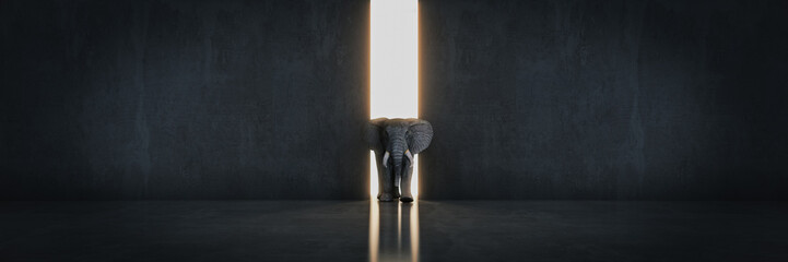 elephant in the room near wall. Creative concept