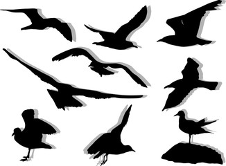 nine seagulls silhouettes on white background