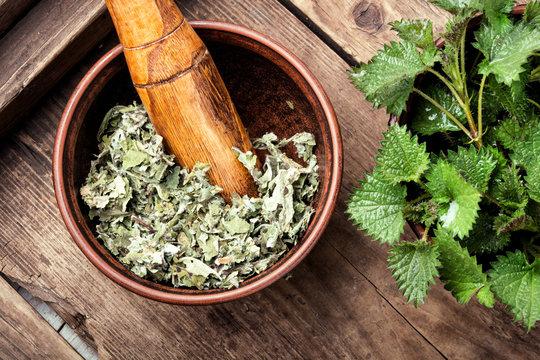 Stinging nettles,urtica medical herb