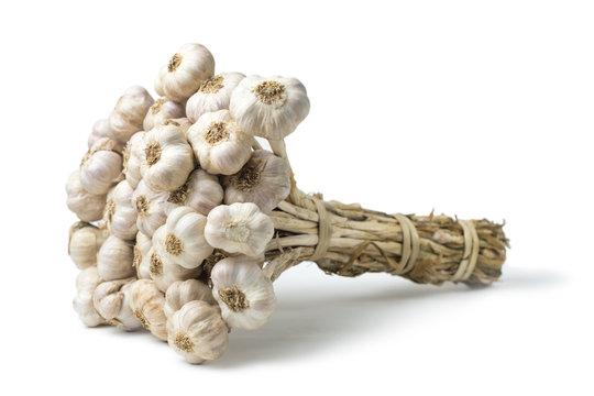 Isolated garlic (Allium sativum) has many medicinal properties and can be used for ingredient food. on white background and clipping path.