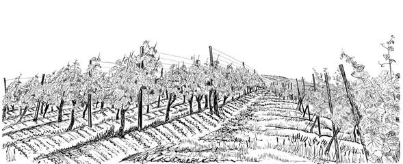 Vineyard landscape hand drawn sketch vector illustration isolated on white Fototapete