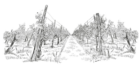 Vineyard landscape hand drawn horizontal sketch vector illustration isolated on white Wall mural