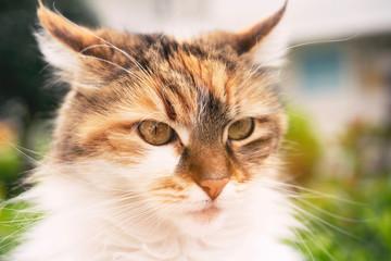 cat close up portrait looking.
