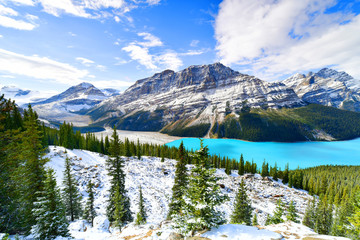 Wall Mural - View from Bow Summit of Peyto lake in, Canada