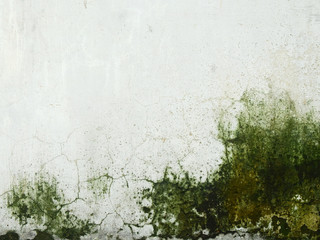 moss on dirty white wall background