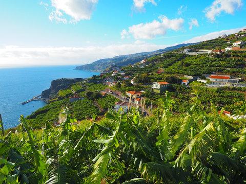 Madeira - Bananenplantagen im Süden