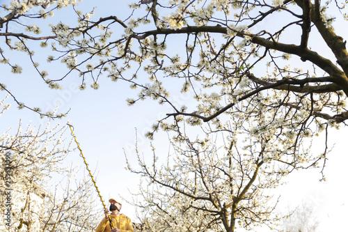 Equipment for spraying apple trees:
