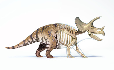 Triceratops morphing from skin to skeleton.