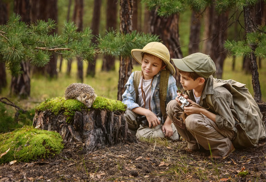 Meeting children and the hedgehog in the forest