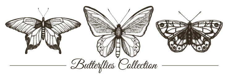 Vector set of hand drawn black and white butterflies. Engraving retro illustration. Realistic insects isolated on white background. Detailed graphic drawing in vintage style.