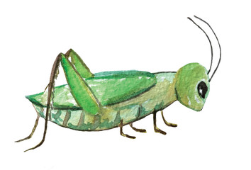 green grasshopper on a white background. watercolor illustration for decoration and design of cards, posters, games and books.