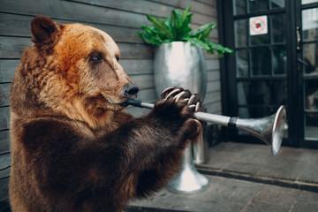 Bear plays trumpet