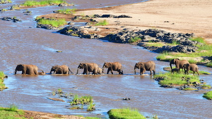Foto auf AluDibond Elefant elephants crossing Olifant river,evening shot,Kruger national park