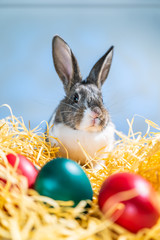 Easter bunny rabbit on the white blue background. Easter holiday concept. Cute rabbit in hay near dyed eggs.  Adorable baby rabbit.  Spring and Easter decoration. Cute fluffy rabbit and painted eggs.