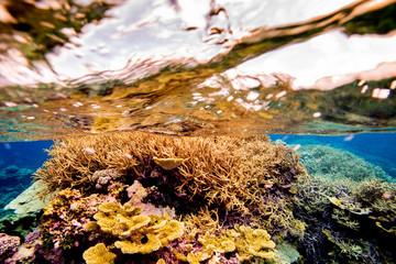 Coral reefs, Palmyra Atoll National Wildlife Refuge,