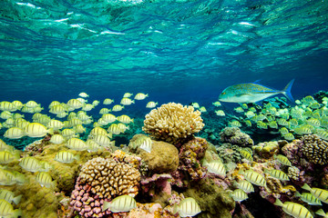 Coral reefs, some of the most pristine in the world. Palmyra Atoll National Wildlife Refuge, part of Pacific Remote Islands Marine National Monument.