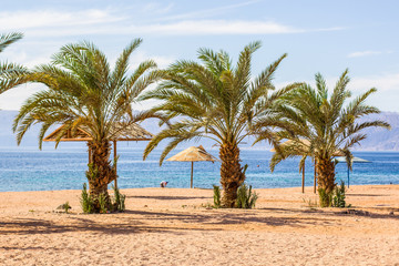 summer vacation travel concept photography sand beach and palm trees  on Red sea picturesque scenery landscape background, picture for touristic agency