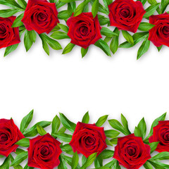 Background of red roses and green leaves on a white background. Horizontal arrangement of flowers. Vintage style. Mock-up.