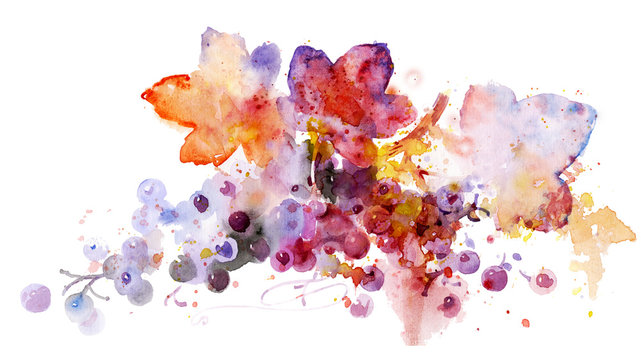 Multicolored grapes, watercolor illustration. Plant element for design and creativity. Beautiful vine on a white background. Beautiful watercolor fruits.