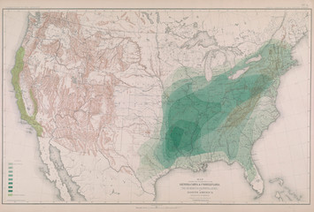 Forest map of America.