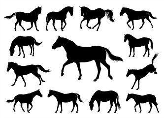 Horses silhouettes graphic vector illustration set