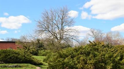 Krzewy z łysym drzewem w tle poziomo