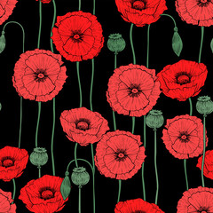 Wild poppies seamless pattern, vector