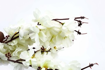 Picture of white orchid flower. Isolated on the white background.