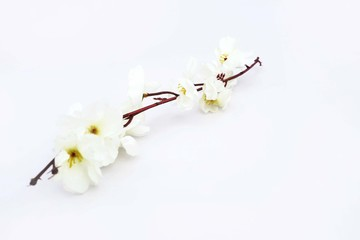Portrait of white flower. Isolated on the white background.