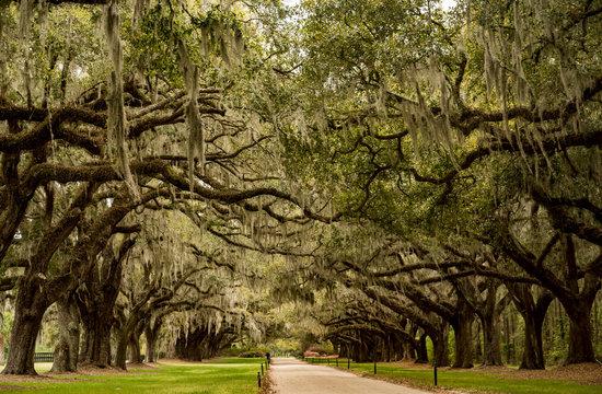 Boone Hall pantation in Charleston SC USA