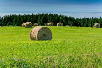 Hay Bales in Rural Nova Scotia