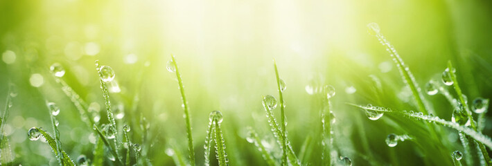 Juicy lush green grass on meadow with drops of water dew in morning light in spring summer outdoors close-up macro, panorama. Beautiful artistic image of purity and freshness of nature, copy space. Fototapete